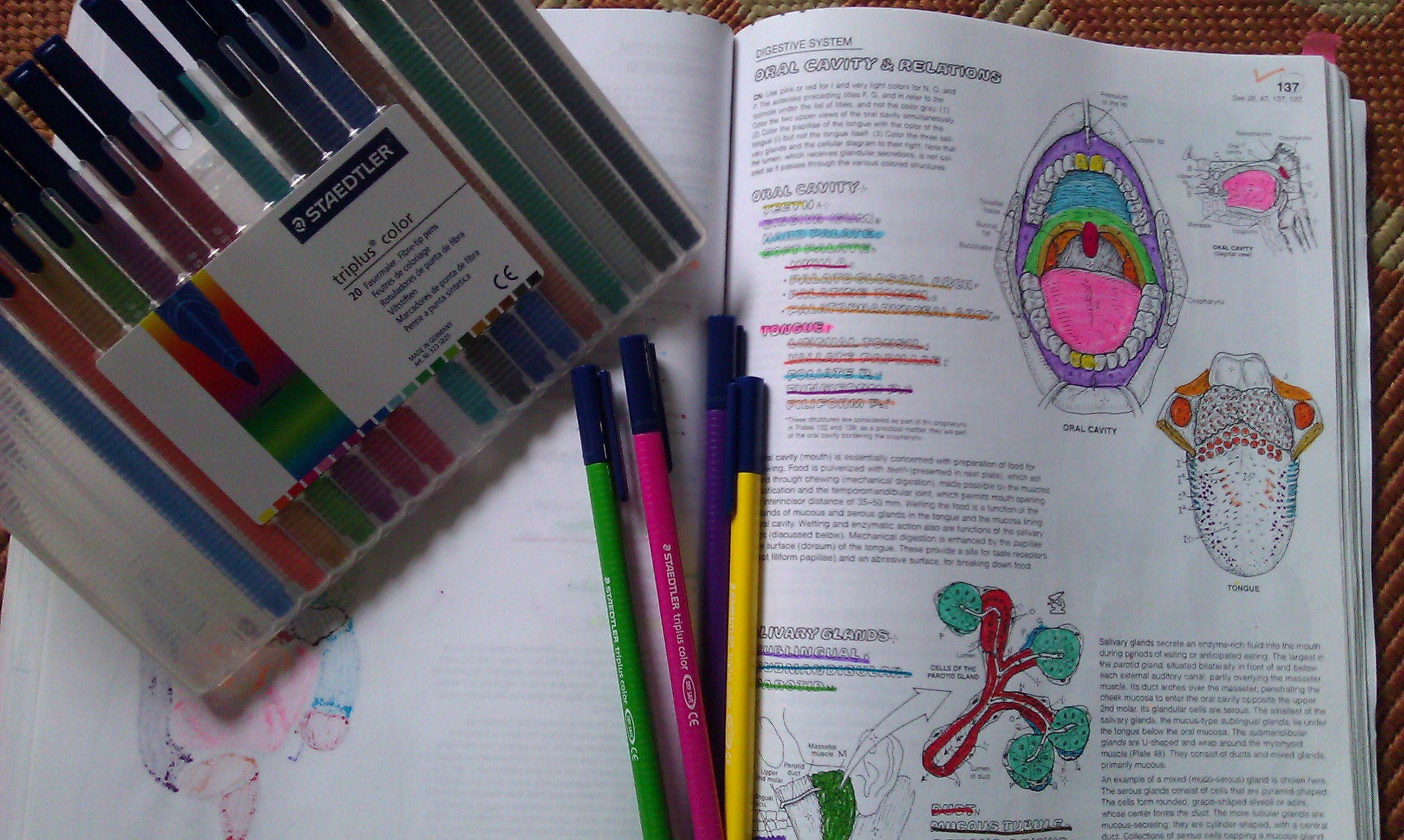 little - Physiology Coloring Book